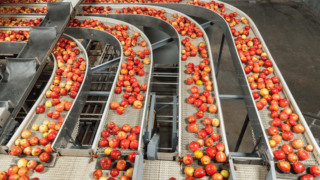 Fruit sorting AI